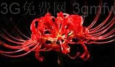 逆战在僵尸猎场《精绝古城》中守护精绝女王棺椁的花是什么?